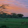 Sunset on our Visit to Kenya - On to Tanzania