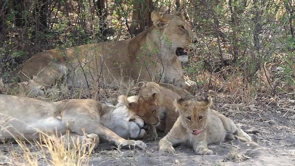 2019 09 Africa - Botswana Safari