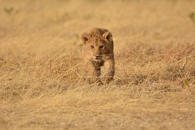 Future Lion King
