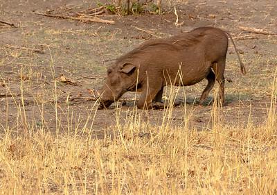 _MLD4171 Warthog