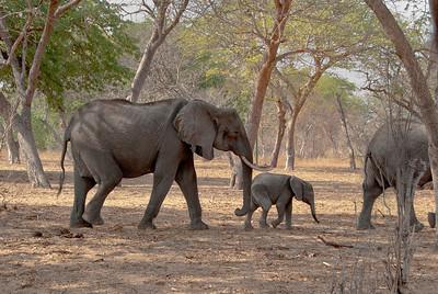 Africa Animals