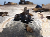 There are thousands of seals on Duiker Island, and it's illegal to go onto the island. But considering how it smelled downwind, I was okay with staying on the boat.