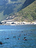 From Hout Bay I took a boat to Duiker Island, a Cape Fur Seal and bird sanctuary.