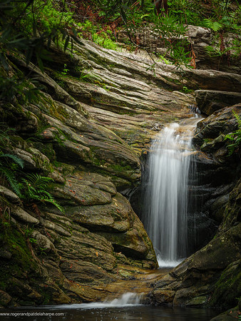 Forest waterfall. Garden Route. Western Cape. South Africa