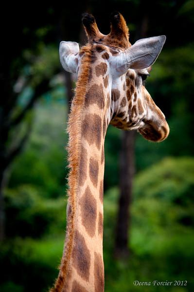 African Animals 2012