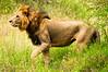 www.kenyadevfund.org