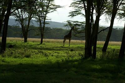 Kenyan Hillside