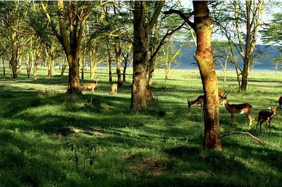 Kenya Hillside