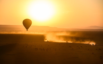 Safari vehicles move into place as hot air balloons prepare to land