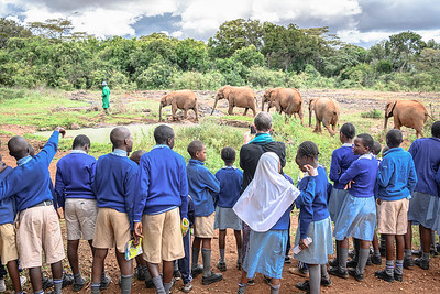 Local schoolchildren at the Elephant Wildlife Orphanage in Nairboi, Kenya