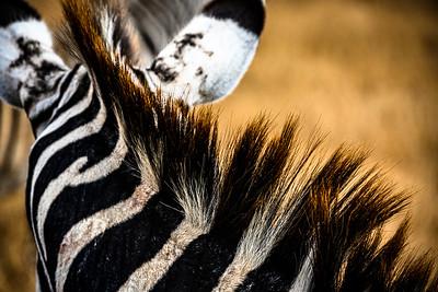 Zebra mane; Ngorongoro Crater, Tanzania