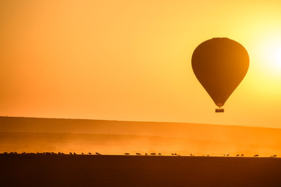 Hot air balloon rises at dawn above a herd of wildebeests; Taken from another hot air balloon over Masai Mara National Reserve, Kenya
