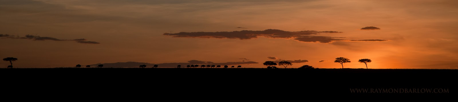 Tanzania Sunset and Wildebeests