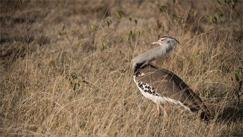 Cory Bustard<br /> RJB Tanzania, Africa Tours<br /> <br /> ray@raymondbarlow.com<br /> 1/2000s f/4.0 at 220.0mm iso200