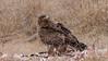 Tawny Eagle<br /> RJB Tanzania, Africa Tours<br /> <br /> ray@raymondbarlow.com<br /> 1/250s f/7.1 at 290.0mm iso200