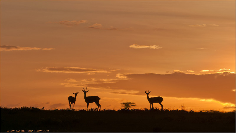 DSC_6051 Sunset on the Serengeti 1200 web