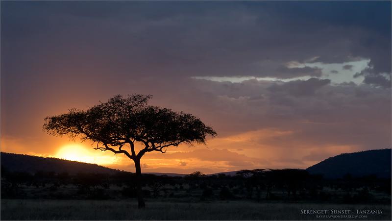 Serengeti Sunset<br /> Raymond Barlow Photo Tours to Tanzania Wildlife and Nature<br /> <br /> ray@raymondbarlow.com<br /> Nikon D800 ,Nikkor 80-200mm f/2.8D ED AF<br /> 1/80s f/9.0 at 112.0mm iso1000