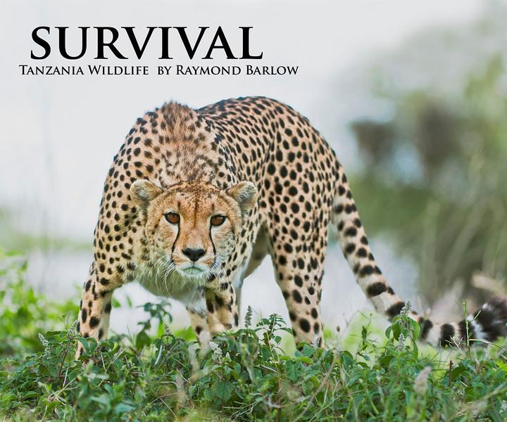 Survival Cover Shot!