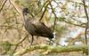 Ibis in Tanzania