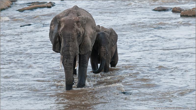 Elephant Family in Tanzania
