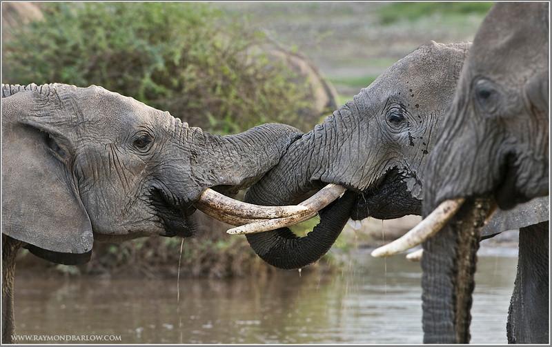Elephants for Fun!