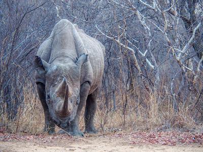 GAdventures Safari Oct7-14 2017 S.Africa, Botswana Zimbabwe