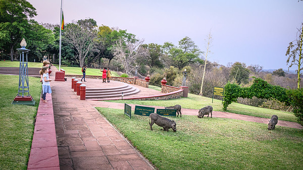 Mingling with the warthogs