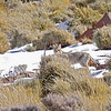 African Wild Cat<br /> Sani Pass, Drakensberg Range<br /> Aug. 6, 2009<br /> ©Peter Candido All Rights Reserved