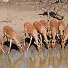Impala does