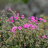 The Tanqua Karoo is known for its richness of endemic flora<br /> Aug. 11, 2009<br /> ©Peter Candido All Rights Reserved