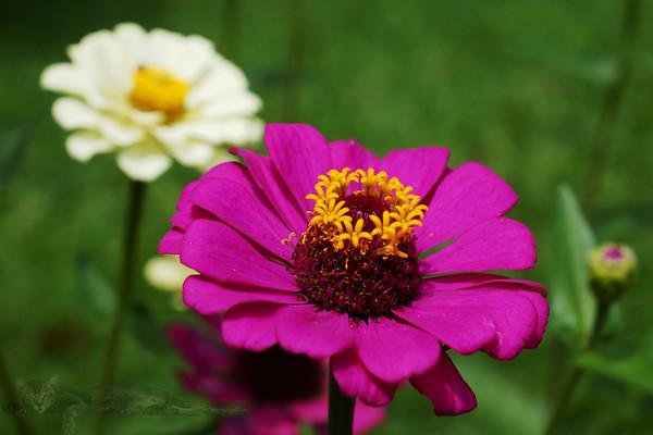 Flower in Entebbe Garden