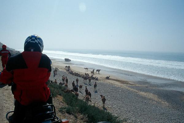 Camels on the beach near Essouira