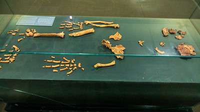 Ardi - besterhaltenes Skelett eines Ardipithecus ramidus, Äthiopisches Nationalmuseum, Addis Abeba