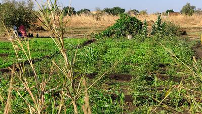 Feld in der Provinz al-Qadarif, Sudan