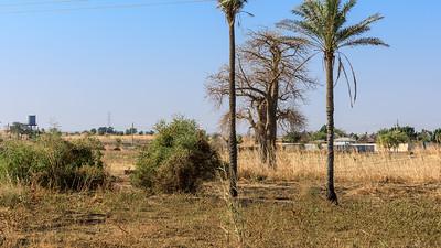 Baobabs wachsen eigentlich weiter im Süden
