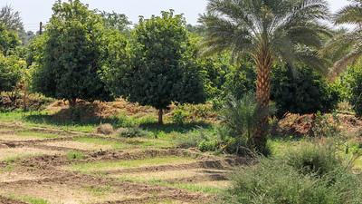 Oasenwirtschaft am Nil