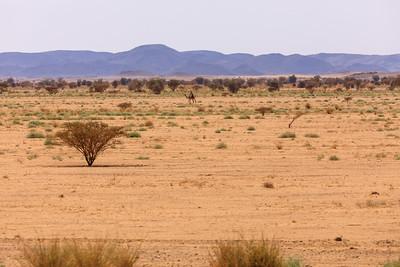 Bayuda Wüste im Nilknie, Bundesstaat Nahr an-Nil, Sudan