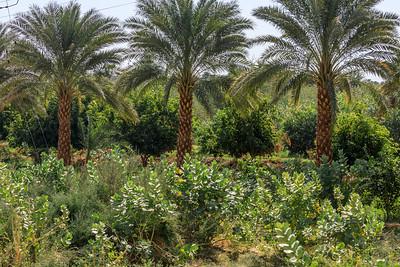 Die fruchtbare Niloase ist manchmal 1 km, manchmal nur wenige Meter breit.