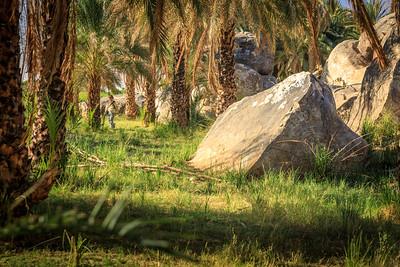 Dattelpalmen am Ufer des Nils in Tumbus, Sudan
