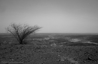 Looking east towards the Chalbi Desert with a lone leafless shrub watching over the whole land.