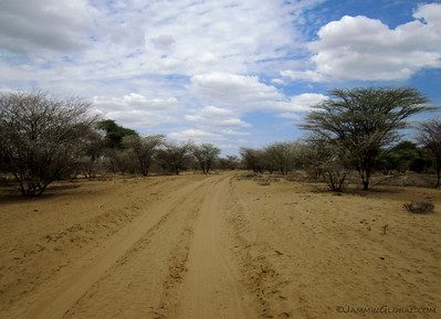After getting our passports stamped out in Omorate, the last town in southern Ethiopia, our convoy of overland travelers turned south for the Kenyan border. The route started off with soft sand through acacia trees.