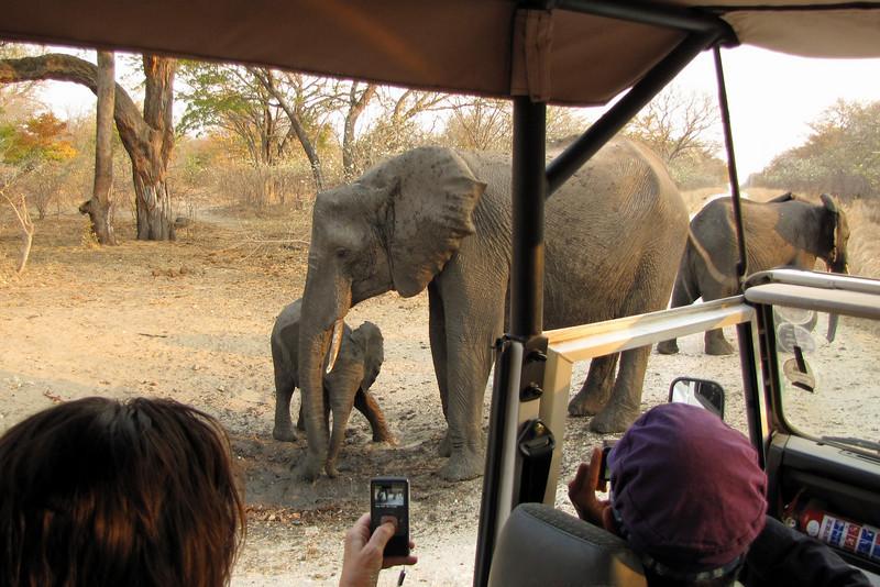 Elephants near Ivory Lodge