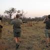 Walking with a rhino