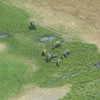 Elephants from the sky