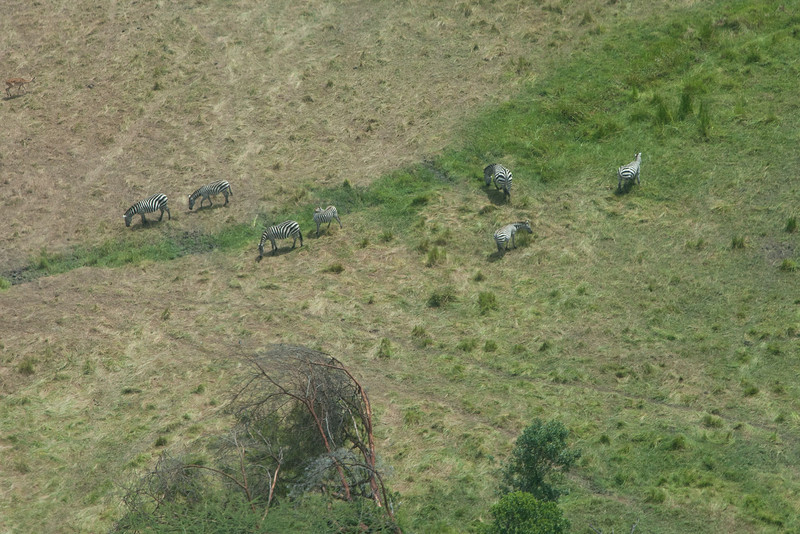 Some more wildlife from the sky