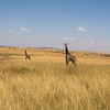 The plains of the Mara