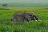 Elephants, Ngorongoro Crater, Tanzania, Africa.  February 2016