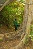 Duluti Forest Reserve, Arusha, Tanzania, Africa.  February 2016