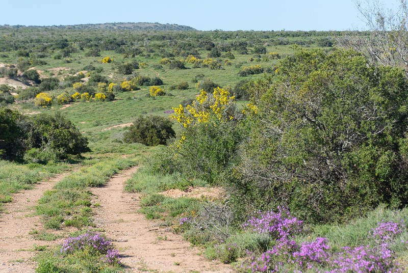 We were delighted at the green undergrowth and multitudes of flowers in Addo -- all day long.  It was just great.