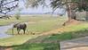 Elephants are everywhere at Ruckomechi Camp